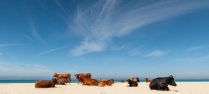 Visitors to the beach in Tarifa